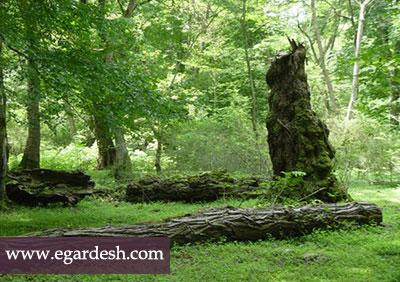 پارک جنگلی کشپل بلده