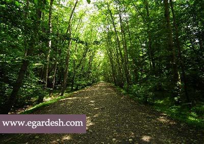 پارک جنگلی نور نور