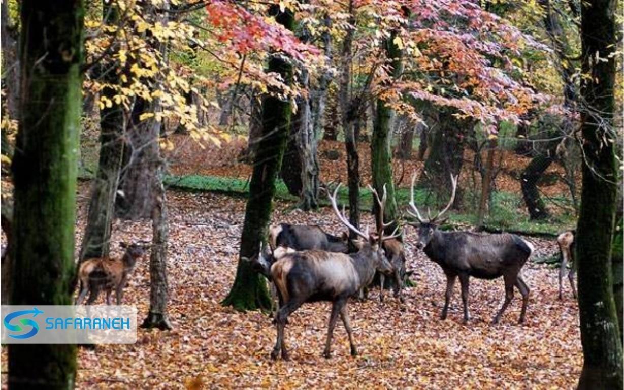 پارک ملی گلستان گرگان