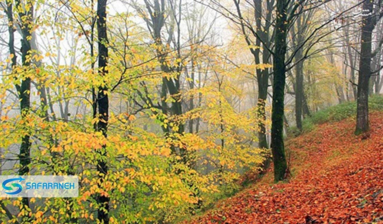 پارک جنگلی کردکوی