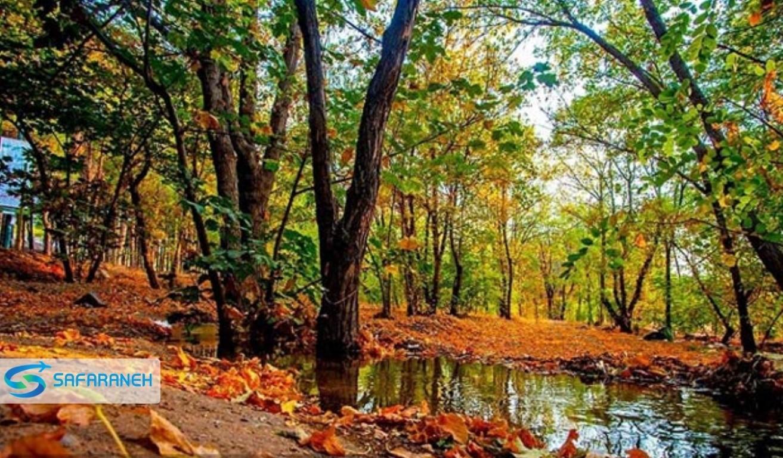 پارک جنگلی صفا رود رامسر