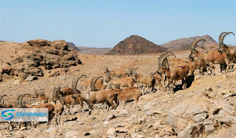 حیات وحش و شکارگاه صحنه
