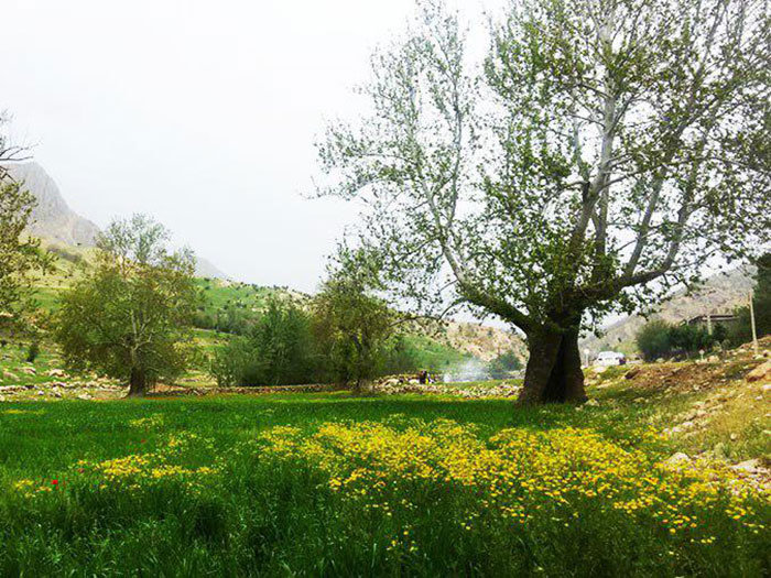 Bazoft-Nature