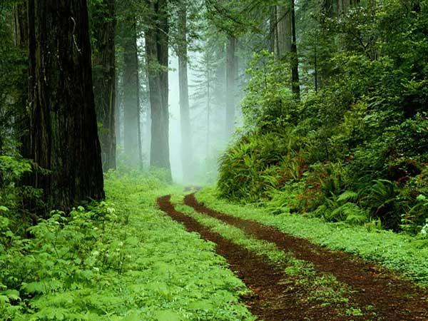 جنگلهای حاشیه دریای خزر