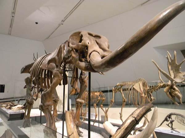ردپای دایناسورها