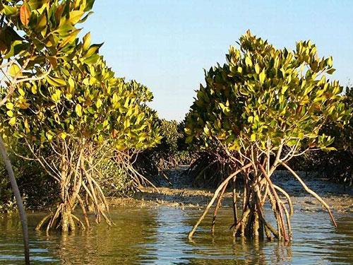persian-gulf-hara-marine-forests